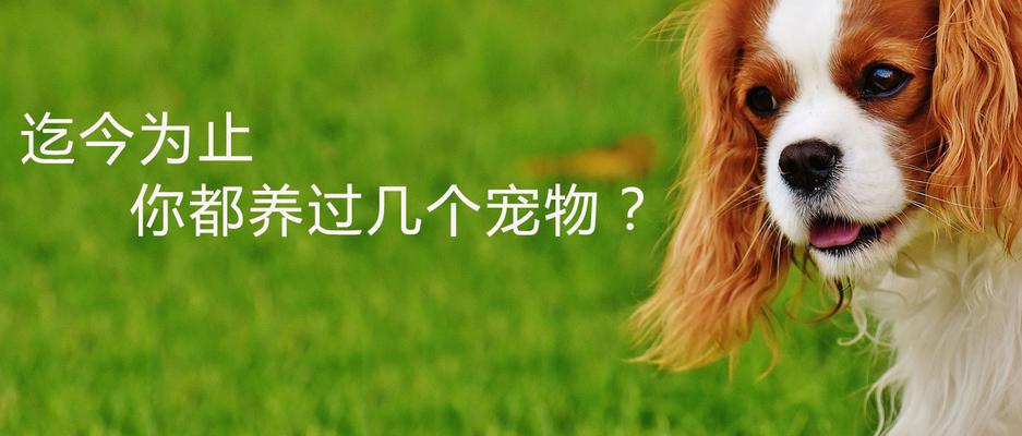 迄今为止你都养过几个宠物?.jpg